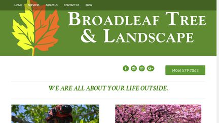 Broadleaf Tree and Landscape